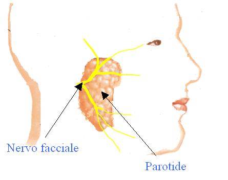 Papillomatosis and malignancy. Translation of
